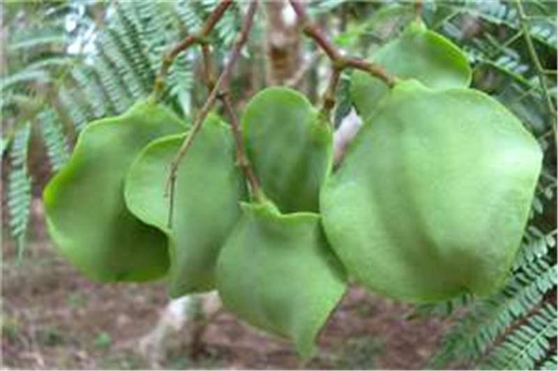 Plantekey | Auroville Botanical Garden